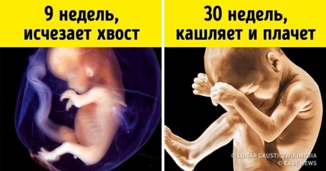Малыш в животике у мамы: что он там делает, как проходит его жизнь?