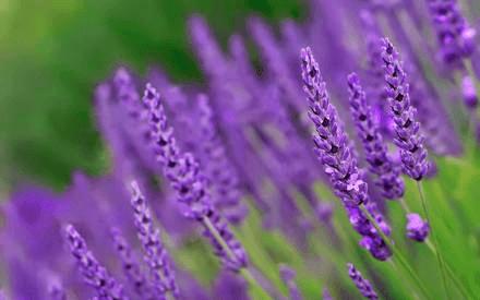 Успокаивающие травы для детей и грудничков: средства для нервной системы, которые добавляют в ванну