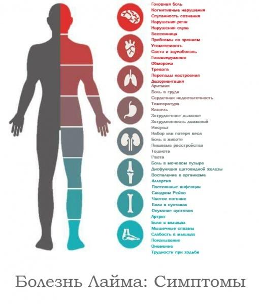 Профилактика боррелиоза у детей после укуса клеща, симптомы болезни Лайма, лечение и последствия