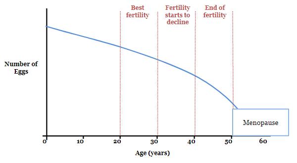 Антральные фолликулы в яичниках - что это такое, для чего они нужны?
