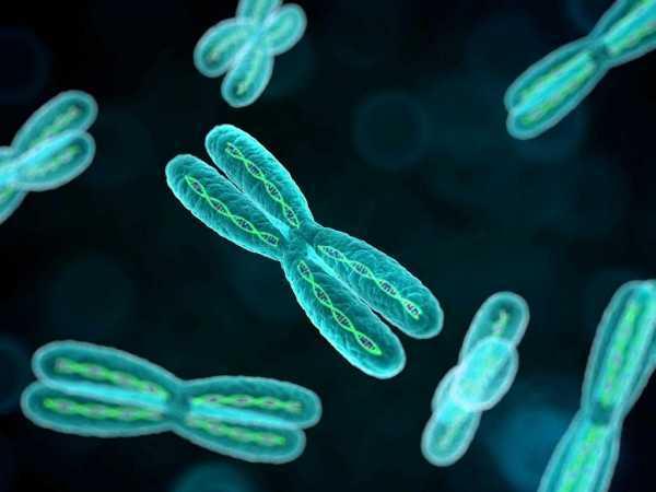 Биохимическая беременность после ЭКО: что это такое, в чем причины патологии?
