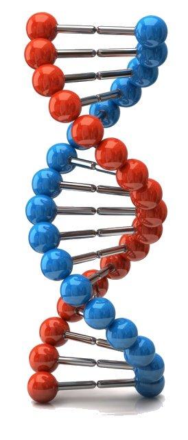 Фрагментация ДНК спермограммы: в чем смысл анализа, как проводится исследование и лечение?