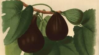 Травы для зачатия ребенка для женщин: какие растения помогают забеременеть, как их использовать?