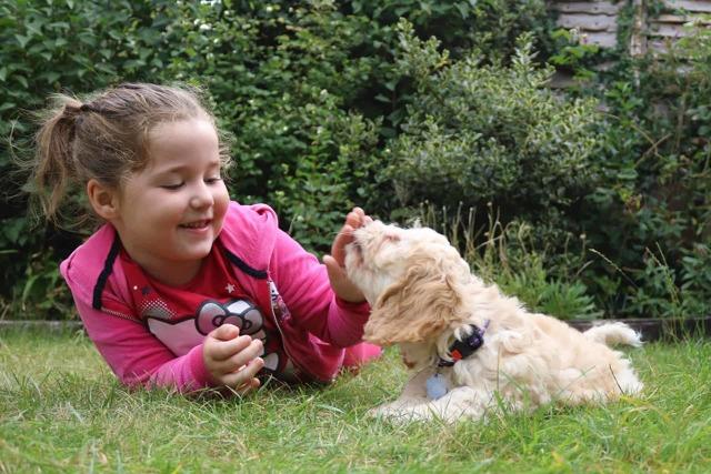 Аллергия на животных у детей: какими симптомами проявляется реакция на шерсть?