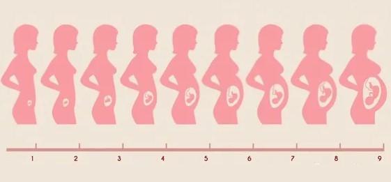 25 неделя беременности: развитие плода – вес и рост, ощущения женщины