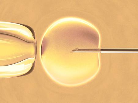 Сколько недель длится беременность с момента зачатия и первого дня цикла?
