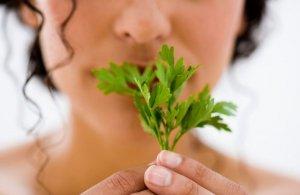 Петрушка при беременности: можно ли употреблять траву на ранних и поздних сроках?