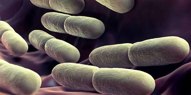 Йодофильная флора в кале у ребенка, патологические бактерии в копрограмме: что это значит?