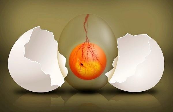 Пустое плодное яйцо или анэмбриония: причины, симптомы и методы диагностики отсутствия эмбриона