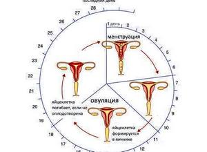 Может ли быть задержка месячных из-за простуды: как влияет ОРВИ на менструацию?