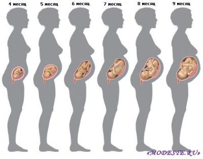Эмбриональное развитие человека: какие стадии формирования проходит ребенок в животе матери?
