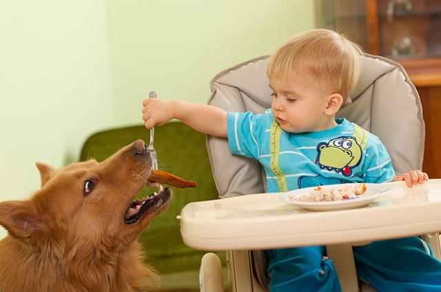 С какого возраста можно давать ребенку печень (куриную, говяжью, свиную), со скольки месяцев?
