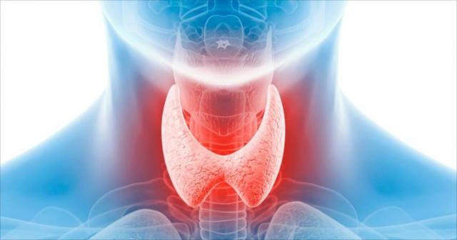 Размеры щитовидной железы по УЗИ у детей: таблица норм для разного возраста и причины отклонений