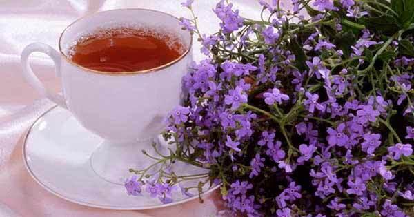 Чабрец при беременности: можно ли беременным пить чай с тимьяном и мятой на ранних и поздних сроках?