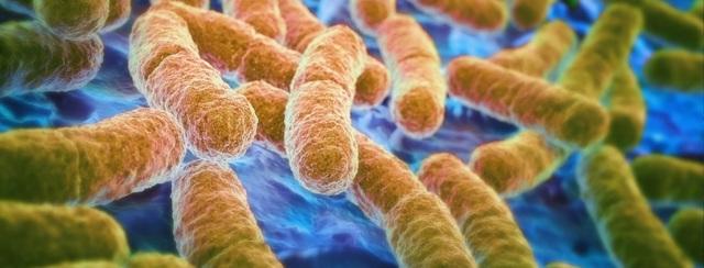 Анализ на дисбактериоз у грудничка: как собрать и сдавать кал, что такое пролиферация у ребенка?