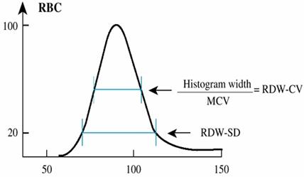 Индекс распределения эритроцитов RDW-SD - понижен у ребенка или повышен в анализе крови - что это?