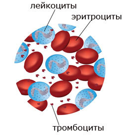 У ребенка понижены тромбоциты в крови: о чем это говорит - причины и последствия